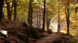 autumn walk 5_400